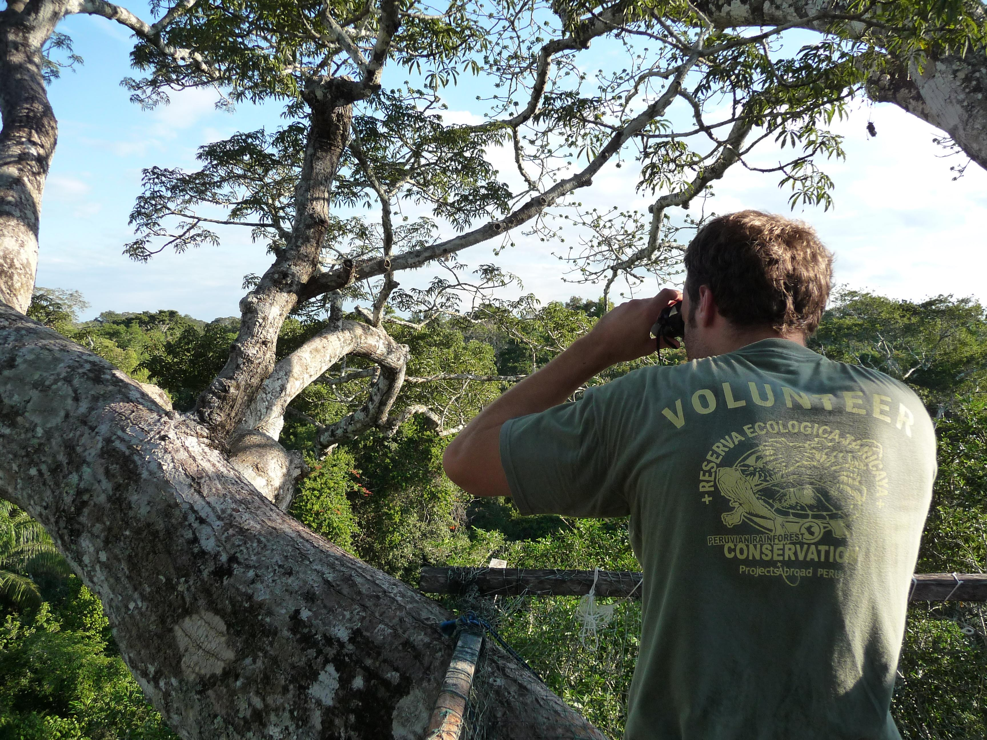 A Projects Abroad male volunteer seen bird watching as part of his conservation volunteer work in the Amazon Rainforest in Peru.